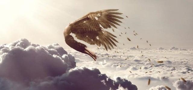 Attilia Sole inaugura la collaborazione a Lunarionuvo con un rubrica che ha intitolato in omaggio a due simboli avicoli tutt'altro che criptici: lo strigide caro a Minerva e il coloratissimo […]