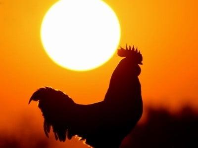 Che pollo quel Max! Tutto preso a cercare galline in un granaio puzzolente. Si divertiva a razzolare e a raccogliere molliche, pastose e bagnaticce, sparse qua e là muovendosi […]
