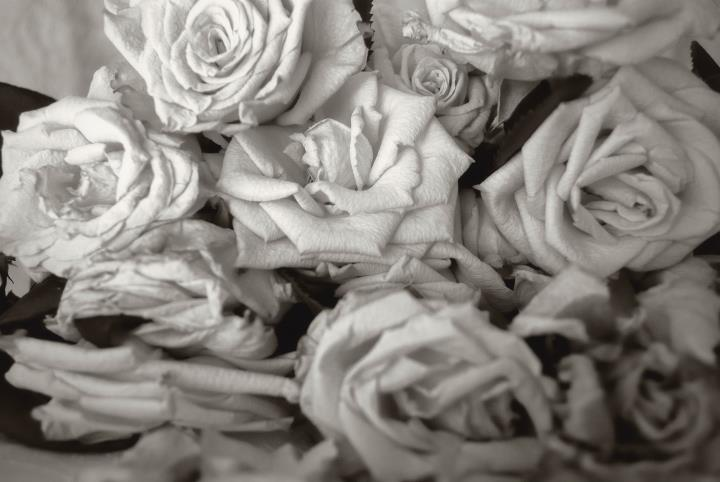 rose sfiorite