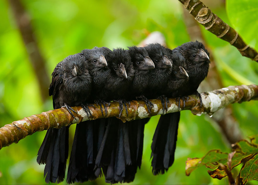 uccelli-stretti